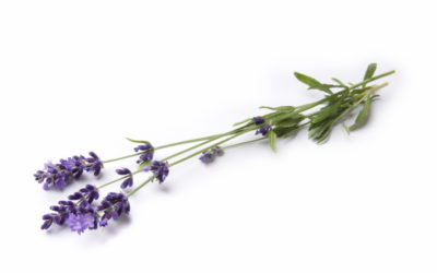 A Simple Way To Use Lavender Essential oil